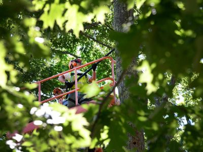 tree_removals_pruning_trimming_abc_tree_services (2)