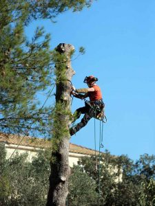 tree_removals_pruning_trimming_abc_tree_services (6)