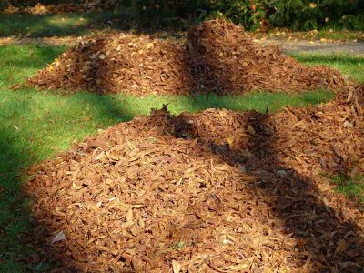 tree_removal_chipping_stump_lopping_services (2)
