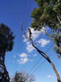 local_tree_removal_nsw