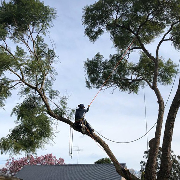 abc tree services removal near me nearby (10)
