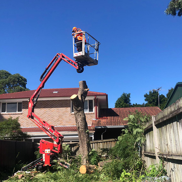 abc tree services removal near me nearby (14)