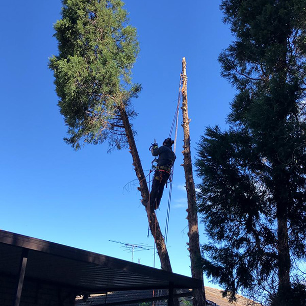 abc tree services removal near me nearby (3)