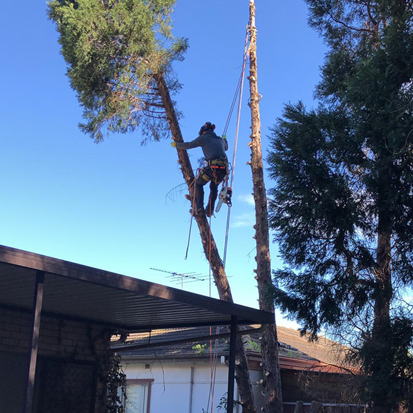 abc tree services removal near me nearby (4)