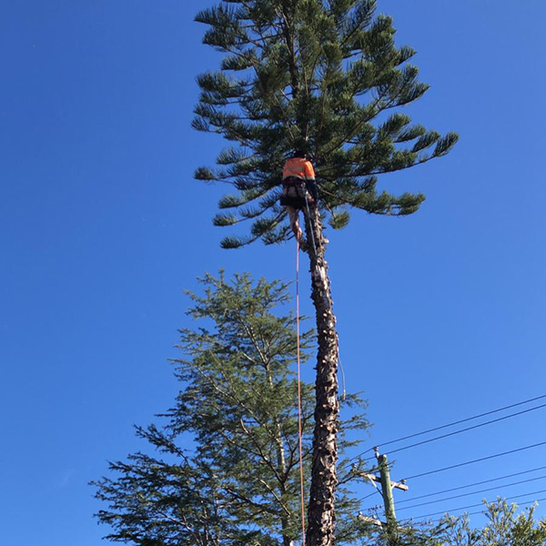 abc tree services removal near me nearby (5)