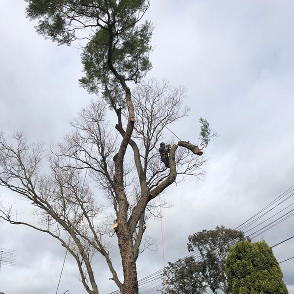 abc tree services removal near me nearby (8)