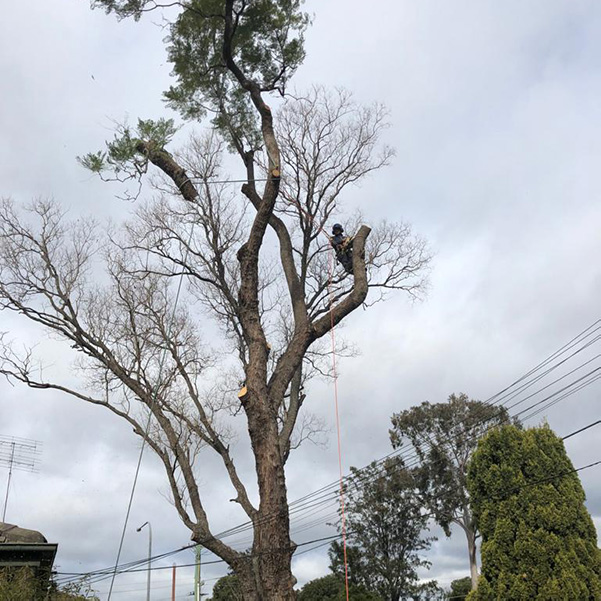 abc tree services removal near me nearby (9)